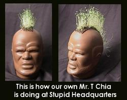 t-chia-ours.jpeg